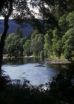 The River Tay Near Aberfeldy